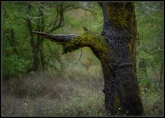 Alone (Ernie Misner) Tags: tree forest park fortsteilacoompark lakewoodwashington washington erniemisner nikon nik lightroom capturenx2 f8andbeinthepark