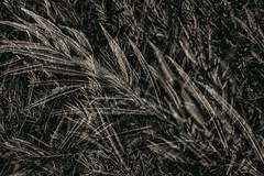 Multiple Nature 347 (pni) Tags: leaf monochrome multiexposure multipleexposure tripleexposure munkkiniemi munksns helsinki helsingfors finland suomi pekkanikrus skrubu pni