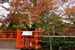 DSC02768 (MrSUIZOU) Tags: 京都 紅葉 北野天満宮 平野神社 十月桜