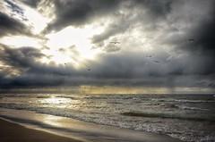 Seagulls & Clouds (mswan777) Tags: sunlight nature shore seascape dramatic bright rain sand waves autumn wind lake michigan water nikon d5100 sigma 1020mm seagull flight scenic