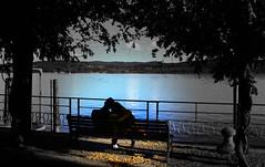 """""""E credimi lo sai che io cercavo un modo per dimenticare.. Dimenticare di volere ancora bene a te.. Ma non ci sono regole che puoi seguire per lasciare scorrere.. E' più forte di me.."""" (xaly87x) Tags: true dreams beginning love tenderness lake trees water colors life truefile arona"""