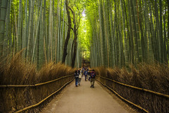 Arashiyama Bamboo Forest (Kokkai Ng) Tags: arashiyama bamboo forest kyoto japan kyotoprefecture treearea kinkiregion tourist traditionalculture pedestrianwalkway tree flora crowd crowded grove kyotocity tourism travel peopletravelling famousplace people japaneseethnicity japaneseculture visit green nature tall asia footpath brightlight day horizontal