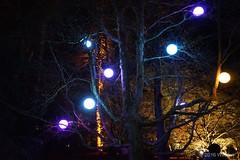 DSC04159 (Twareg) Tags: 2016 aboretum bpw enchanted forest westonbirt bathphotowalk gloucestershire england