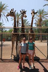 DSC_0918 (RD1630) Tags: oasis park nature natur animal outside outdoor fuerteventura summer spain canary islands tier giraffe antelope zebra africa afrika