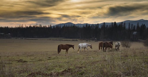 Sunset on the ranch  #wpguestranch #guestranch #duderanch #sunset #horses #vacation #staypnw #destinationidaho #visittheusa #visitidaho #ranchlife #adventuretravel