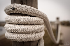 USA TRIP - DAY 18/19 - MORRO BAY ROPE (andybseesthings) Tags: morrobay morro bay state park san luis obispo county slo california usa america roadtrip travel travelblog travelphotography blog wanderlust wanderlog adventure rope dof muted tones nikon sigma
