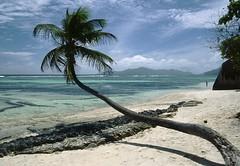 Anse Source d'Argent, Ladigue Island, Seychelles (Jim 592) Tags: seychelles island ladigue anse source dargent palm indian ocean