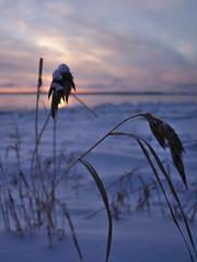 Heiniä (pikkuanna) Tags: oulu 2016 lumi snow ilta night meri sea ranta shore