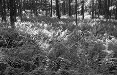 Minolta H9 Jun16 005 (whiskeybravo) Tags: 100 h9 minolta ultrafine bw film