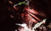 abstract glow (chayapathi sarath (chapps)) Tags: ifttt 500px beautiful beach high hill coconut trees sand landscape palolem goa india chapps photography chayapathi iit iitg guwahati guntur andhra location