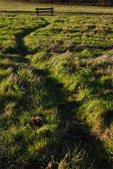 Day #3255 (cazphoto.co.uk) Tags: panasonic lumix dmcgx7 panasonic20mmf17lumixgiiasph project366 beyond2922 281116 tylerswood path grass seat pathofdesire lowsun greatwarley