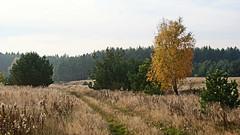 Autumn (arletasz) Tags: autumn leaves jesie viev colours october september apple rose landscape meadow forest field