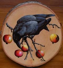 wrona (Corvus corone) (koty333) Tags: carrion crow corvuscorone