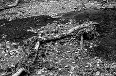 Tree debris in the burn (Stanley Burn Woods) (Jonathan Carr) Tags: tree abstract abstraction rural northeast landscape debris leaves burn black white bw toyo45a 6x9 monochrome