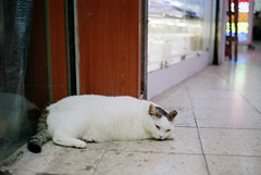 cats in the city (Steve only) Tags: konica hexar rf minolta mrokkorqf 12 f40mm 402 f2 40mm rangefinder fujifilm 100 100 film epson gtx970 v750 snaps cats
