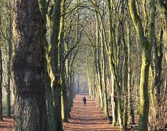 Jogging (JDAMI) Tags: soleil ombres vert tronc allée bois forêt gelée amiens somme picardie nikon d600 jdami woods trees sun feuillesmortes jogging joggeurs
