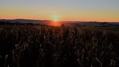 Sunset over a dead crop. (Drive-By Photography) Tags: sunset sky field farmland