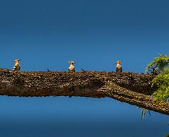 The tree mousqueteers (rey_claude) Tags: voyage summer colors bee bleu promenade t oiseau croatie picvert croatien pekker