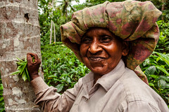 Tea pickers (christophe monteil) Tags: voyage travel woman women tea indianocean srilanka galle jaffna trincomalee teaplantation batticaloa sigiriya tamoul tamils oceanindien teapickers monteil tamouls christophemonteil chrismonteil poquitochris teapickersgalle