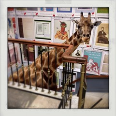 Browsing Boston's Brattle Books (Janine Graf) Tags: boston stairs massachusetts surreal bookstore surrealist giraffe booklover brattlebooks juxtaposer tiltshiftgen kingcamera janinegraf iphone5s