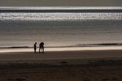Digging for treasure? (David Fullwood) Tags: ireland sea holiday beach sand digging shore fatherandson seashore countywexford curracloe