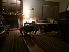 Day 263 (boxbabe86) Tags: dog lamp jen exercise saturday fitness timer iphone day263 saugus 365days 10secondtimer instagram