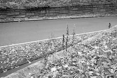(a.cadore) Tags: nyc newyorkcity blackandwhite bw landscape centralpark uptown fujifilm uws transverse 27mm xt1 xf27mmf28 fujifilmxt1