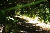 IMG_1973 (lorenzoVictor) Tags: parco verde foglie photoshop italia piano tunnel natura primo amore calabria vita degli magia amori sfocatura agraria