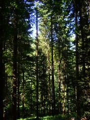 DSCF0815 (JohnSeb) Tags: trees tree forest germany deutschland rboles bosque arbre schwarzwald baum fort badenweiler johnseb bumen eurotour2012