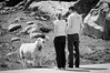 The encounter (Explored 16 Sept. 2015!) (wazabees) Tags: travel summer vacation bw sunlight dutch norway horizontal outdoors sheep favourite farmanimals rogaland d300 forsand