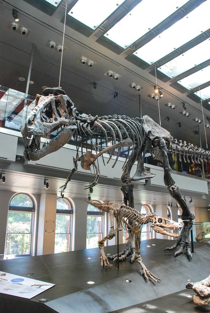 Mammalogy Florida Museum Natural History