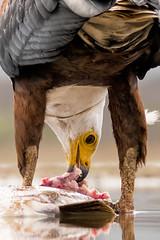 LUMIX DMC-FZ300 - Bence Mt- Afrika (LUMIX Deutschland) Tags: africa leica travel bird animal lumix tiere wildlife panasonic afrika mate makro vogel reise bence reisefotografie tierwelt makrofotografie bencemt fz300