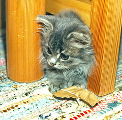 00369 (d_fust) Tags: cat kitten gato katze 猫 macska gatto fust kedi 貓 anak katt gatito kissa kätzchen gattino kucing 小貓 고양이 katje кот γάτα γατάκι แมว yavrusu 仔猫 का बिल्ली बच्चा