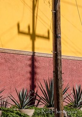 Telephone post and shadow. (Rob Huntley Photography - Ottawa, Ontario, Canada) Tags: shadow mexico photography photo photograph sanmigueldeallende sanmiguel telephonepole mx telephonewires agaves stuccowall robhuntley
