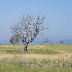 Rester debout -* (Titole) Tags: trees sky tree landscape deadtree squareformat provence plateaudevalensole thechallengefactory titole nicolefaton