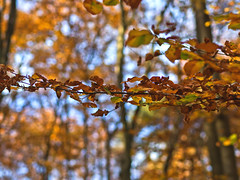 Beeches and Sky (dolorix) Tags: light colour forest licht buchenwald bokeh wald farbe beech buche dolorix