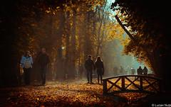 Central Park (Lucian Nuță) Tags: autumn sunset fall romania cluj napoca clujnapoca