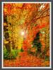 Autumn Glow (BigCam2013) Tags: autumnleaves autumnglow autumn woods trees notinexplore mostviewed bigcam2013 ecosse scotia