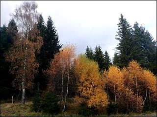 dh - l'été en novembre (Summer in November)