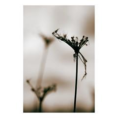 S u b e s p a c i o s   2 (creonte05) Tags: blackandwhite naturaleza macro blancoynegro blanco nature vertical sepia contraluz nikon bokeh minimal fondo minimalista 2015 d7100 eduardomiranda