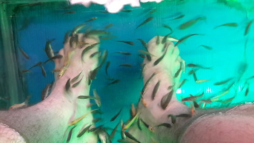 Fish Spa #3
