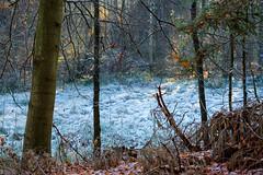 Frost (jaceek81) Tags: frost mrz listopad natura las forest autumn jesie fujifilm xt10 xf60mm polska lubuskie