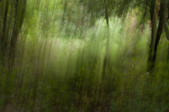Woodland dream scene (Suzanne.Russell) Tags: intentionalcameramovement incameramultipleexposures woodland abstract filteredlight