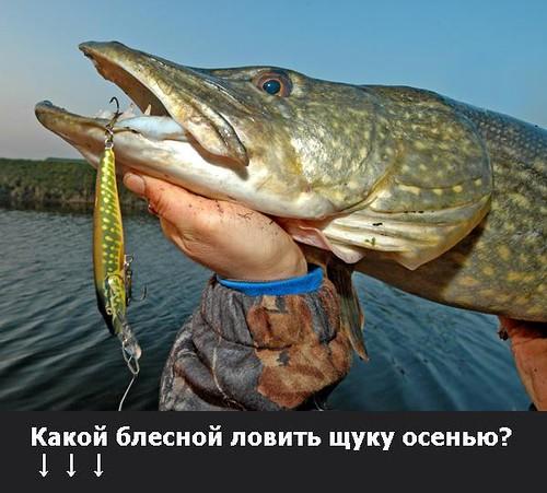 когда клюет рыба на десне
