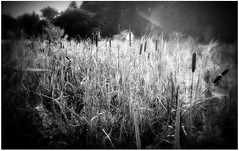 (Riik@mctr) Tags: wilmslow cheshire twinnies bridge carrs park bollin river valley riverside walk woodland nokia n95 fone phone blackandwhite monochrome texture serene abstract water landscape field grass outdoor plant