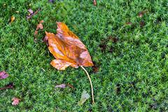 PWN Noorderstraat (johan wieland) Tags: autumn castricum herfst noorderstraat pwn noordholland netherlands nl