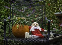 Succulent pumpkin (julesnene) Tags: julesnene juliasumangil succulents succulent pumpkin happy halloween backyard dolls canon7dmarkii canon7dmark2