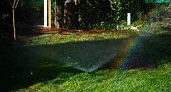 DSC_1287 (PaloSalvatore) Tags: argentina buenosaires pilar agua water nature naturaleza arcoiris rainbow gotas drops nikon photo foto photography fotografia garden jardin regador amazing captura capture reflejo reflection