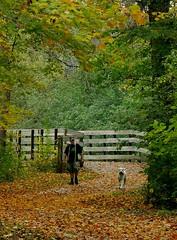 Dog With Best Friend (Ken Mattison) Tags: dogs people trail outdoor nature autumn fall leaves color colour friends friendship walk oakleaftrail milwaukee wisconsin panasoniclumix fz1000 bridges trees serene