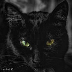 Ready for Halloween (catoledo) Tags: 2016 jacinta monochrome pet buenosaires ciudadautónomadebuenosaires argentina ar fotocompetitionbronze fotocompetition matchpointwinner mpt594
